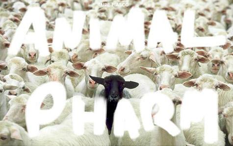 animal-pharm